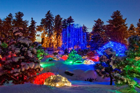 blossoms of light - Blossoms Of Light Denver Botanic Gardens December 10