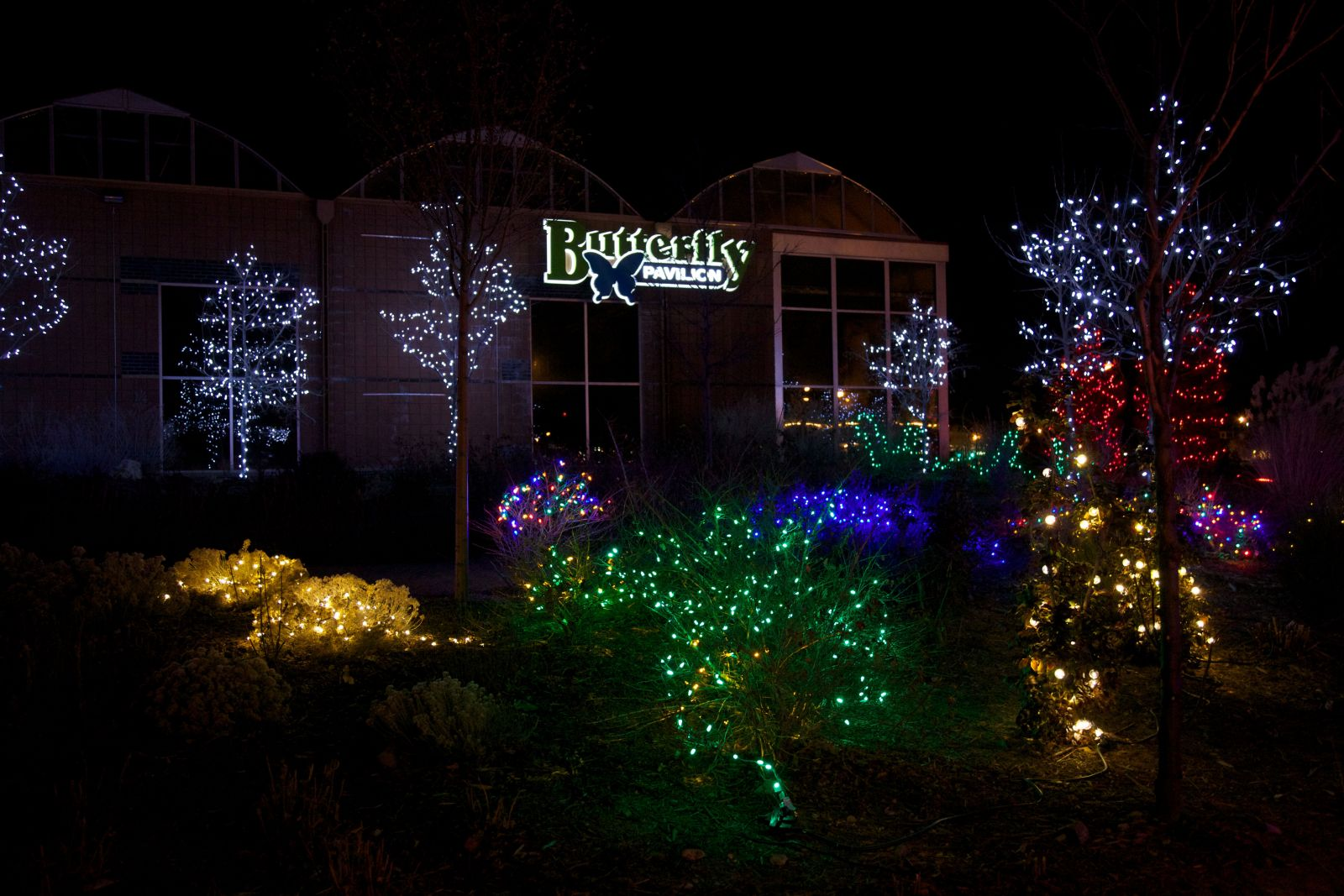 Christmas Lights In Denver